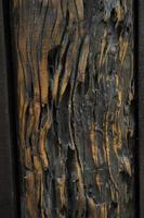 madera vieja foto