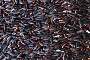 Black rice paddy photo