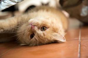 linda cara de gato.
