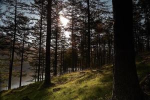 bosque de negocios foto