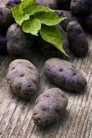 patata azul-violeta vitelotte (solanum × ajanhuiri vitelotte noir foto