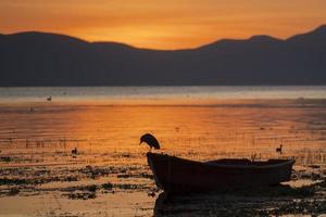 barco y pájaro