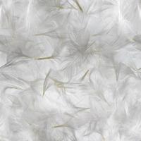 patrón de plumas blancas foto