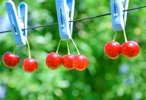 GMO cherries photo