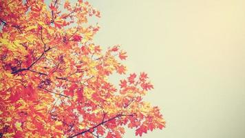 Retro vintage toned autumnal background withs copy space.