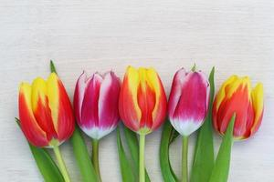 Colorful tulips on white wooden surface with copy space