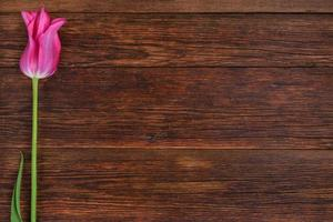 Pink tulip flower on wooden table background with copy space.
