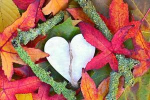 le foglie di autunno cadono con lo spazio vuoto della copia di forma di cuore di legno