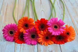 border row gerber daisies on wooden empty copy space background