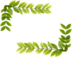 blank copy space of green leaf isolated on white background