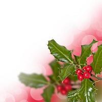Branch of holly, isolated on white background with copy space