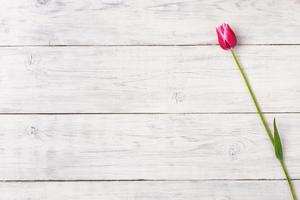 Pink tulip flower on wooden background. Top view, copy space. photo