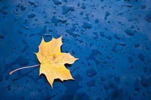 leaf on rainy day photo