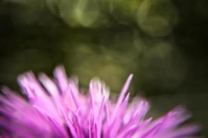 Pink thistle abstract