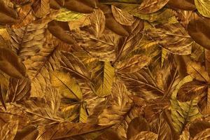 Fondo de hojas vintage