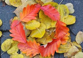 Wreath-shaped red leaves on the ground photo
