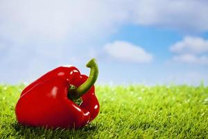 Red paprika on grass, copy space