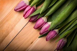 Pink tulips on a wooden background. Copy space photo