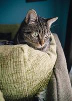 gato en casa foto