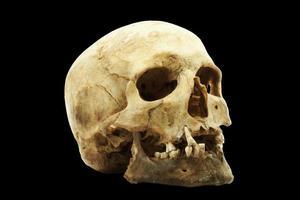 cráneo humano genuino foto