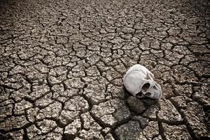Human skull on a dry land photo