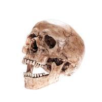 isolated skull photo