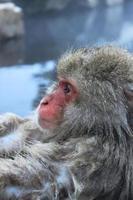 mono de nieve de cerca