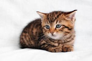 Kitten relaxing