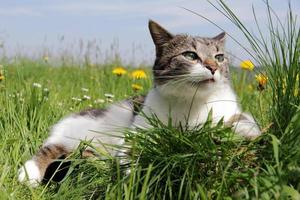 little cat is relaxed in the grass