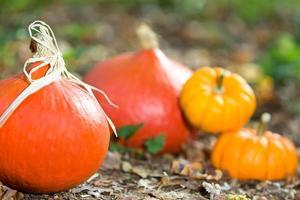 Autumn vegetable close-up photo