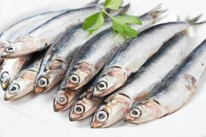 Fresh anchovies close up