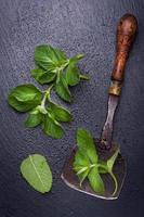 Mint and vintage chopper knife. Background chalk board