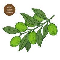oliveira ramo vintage design vetor