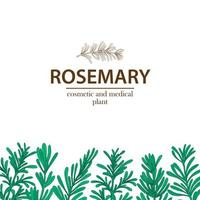 White Background with Rosemary Sprigs vector