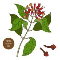 clou de girofle design botanique vintage