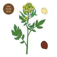 ensemble de botanique vintage moutarde