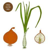 Onion Vintage Drawing Set