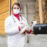 veterinario examen de cerdo. foto
