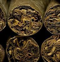 Macro de cigarrillos secos marrones o cigarillo como concepto de adicción foto