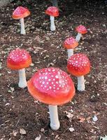 Paper Mache mushrooms - bare ground photo