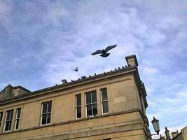 Birds of Bath