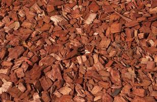 Red and orange wood chips texture. photo