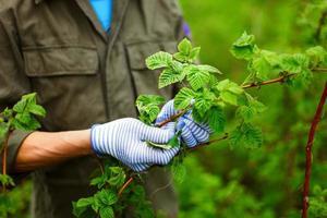 Gardener.