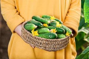 jonge vrouw met een mand vol verse komkommers