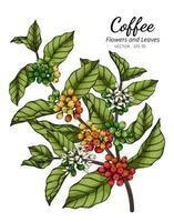 mão desenhada café flor e folhas vetor