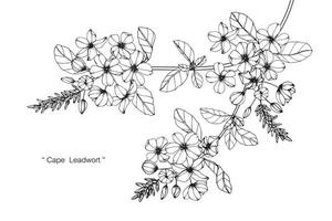 Hand Drawn Cape Leadwort Flowers vector
