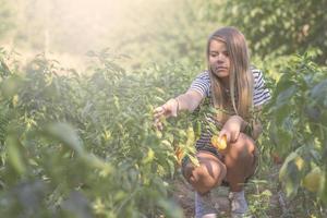 teenager picking up paprika
