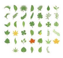 conjunto de hojas y elementos botánicos vector