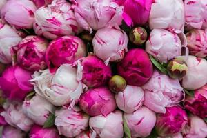 Bouquet of pink peony. Floral pattern.