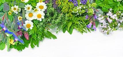 medicinal herbs photo